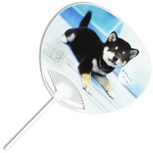 Uchiwa - Puppy