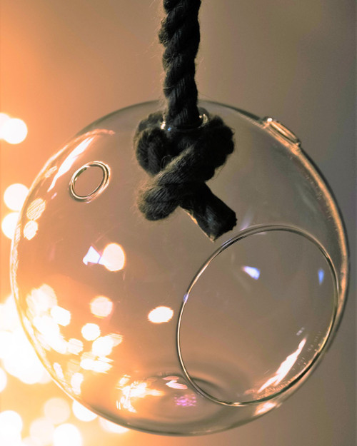 Hanging Glass Ball Terrarium with rope *