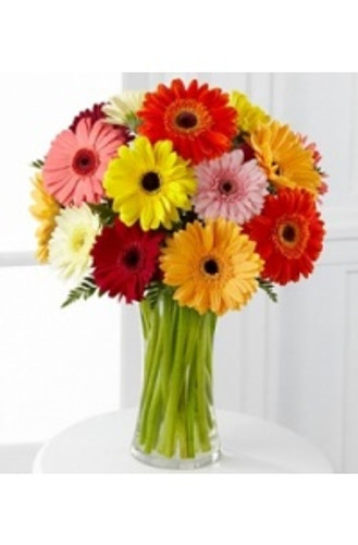 Cheerful Gerbera Daisies
