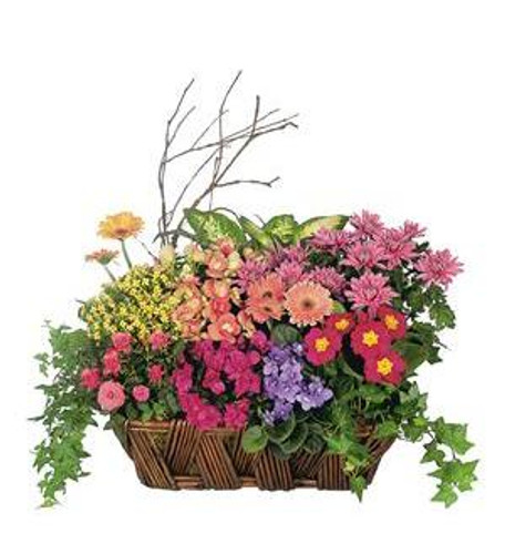 Premium Basket of Blooms