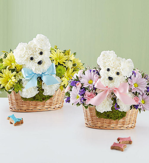 It's a-DOG-able Boy or Girl When it comes to new baby gifts, our truly original arrangement is the pick of the litter! Fresh white carnations are expertly crafted in the shape of an adorable dog, surrounded by a mix of fresh, colorful blooms and nestled inside a charming basket. Choose €œbaby girl€ or €œbaby boy€ for a sweet surprise that'll leave the new parents smiling.