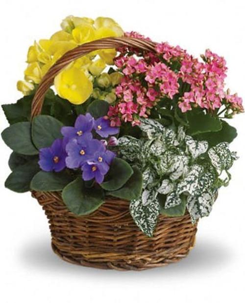 Basket of Blooming Plants