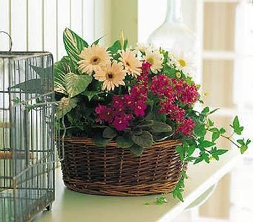 Blooming and Green Plant Basket