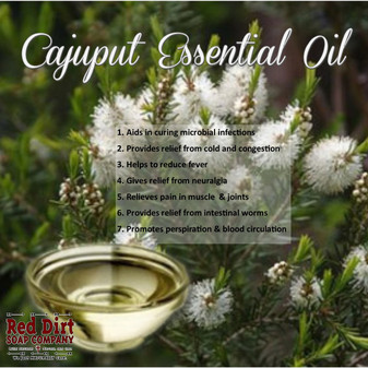 Cajuput Essential Oil - Red Dirt Soap Company