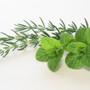 Rosemary Mint Bar, Red Dirt Soap, Natural Lotion Melt, natural skin care, natural wax melt, scented wax tart