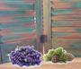 Lavender, Cedar wood, essential oil, natural shampoo, natural hair care, natural skin care, natural soap, red dirt soap