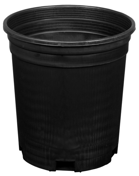 Plastic Pot (1 Gallon)