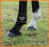 The sizing chart below is appropriate for all Iconoclast® Orthopedic and Rehabilitation Boots.  We recommend using a soft tape measure. If you do not have a soft tape measure you can use something like string, wrap it around the fetlock, mark where the end meets the rest of the string and then simply lay it flat next to a tape measure, ruler or yard stick to get your measurement.  Be sure to measure both the FRONT & BACK fetlocks as they are often different sizes. Customers regularly order boots in one size for the front legs and a different size for the hind legs.