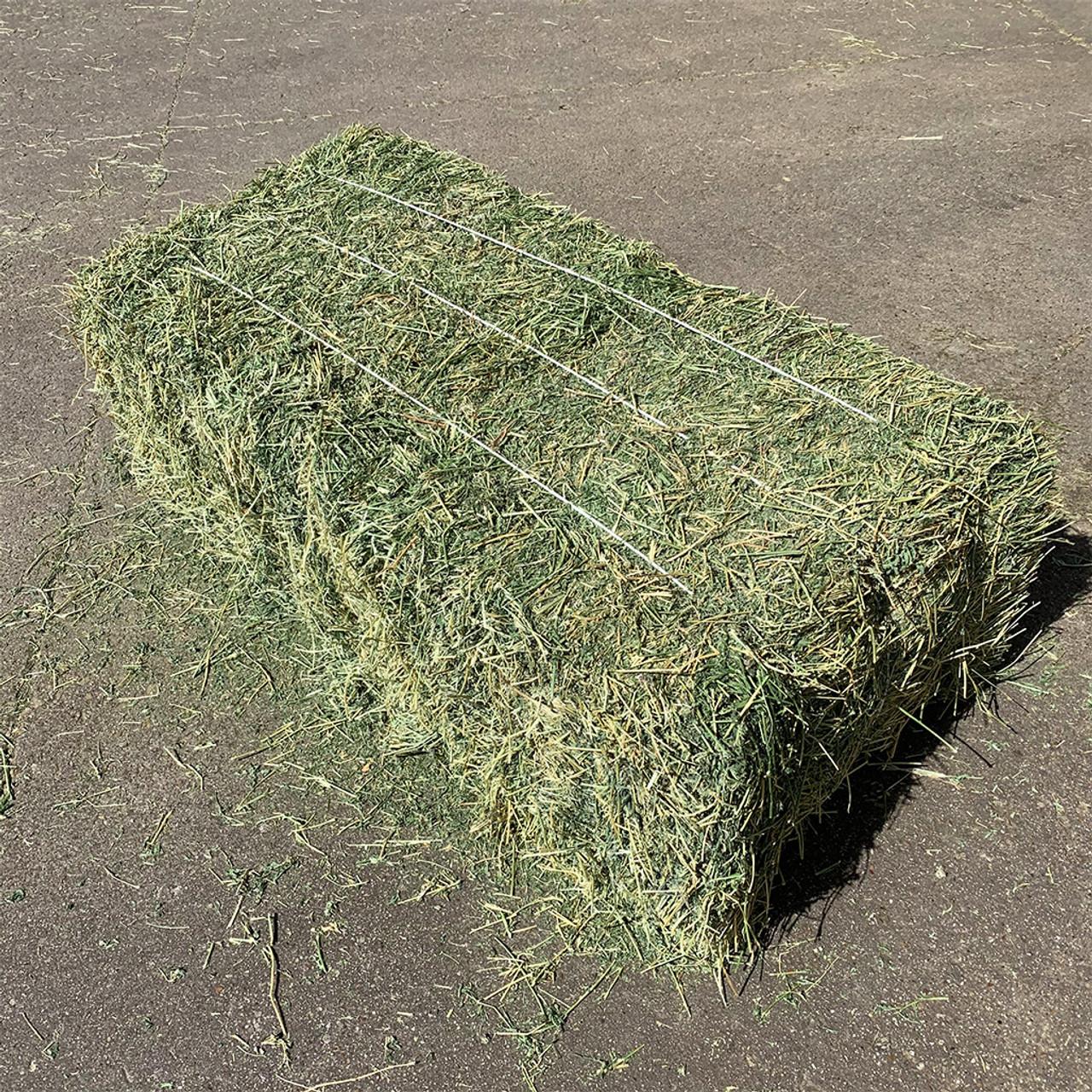 Alfalfa 3-String