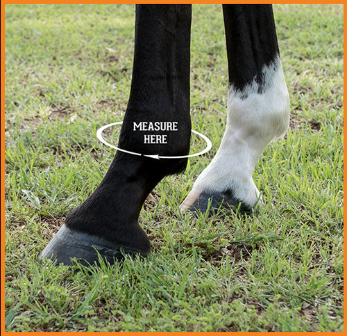 MEASUREMENT & SIZING CHART The sizing chart below is appropriate for all Iconoclast® Orthopedic and Rehabilitation Boots.  We recommend using a soft tape measure. If you do not have a soft tape measure you can use something like string, wrap it around the fetlock, mark where the end meets the rest of the string and then simply lay it flat next to a tape measure, ruler or yard stick to get your measurement.  Be sure to measure both the FRONT & BACK fetlocks as they are often different sizes. Customers regularly order boots in one size for the front legs and a different size for the hind legs.  Small: 8.5 - 9.5 in. / 21.59 - 24.13 centimeters Medium: 9.5 - 10.5 in. / 24.13 - 26.67 centimeters Large: 10.5 - 11.5 in. / 26.67 - 29.21 centimeters XL: 11.5 - 12.5 in. / 29.21 - 31.75 centimeters XXL: 12.5 - 13.5 in. / 31.75 - 34.29 centimeters
