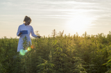 The Benefits and Legality of CBD