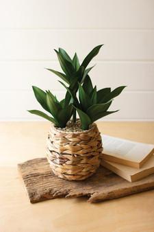 Artificial Plant In A Woven Planter #12 (CNL1353)