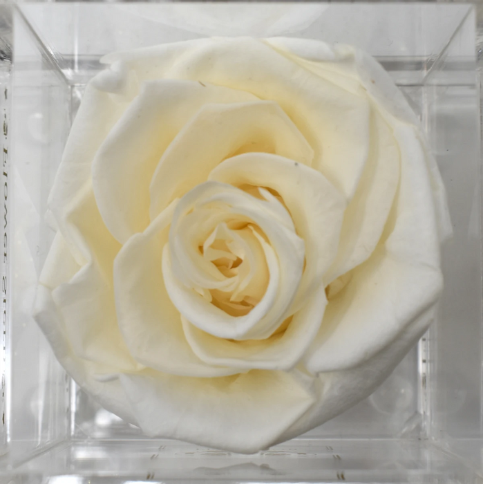 N°1 in Diamond Cut Acrylic Box Eternal Roses