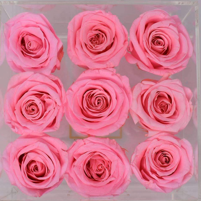 Single Color Collection Eternal Roses