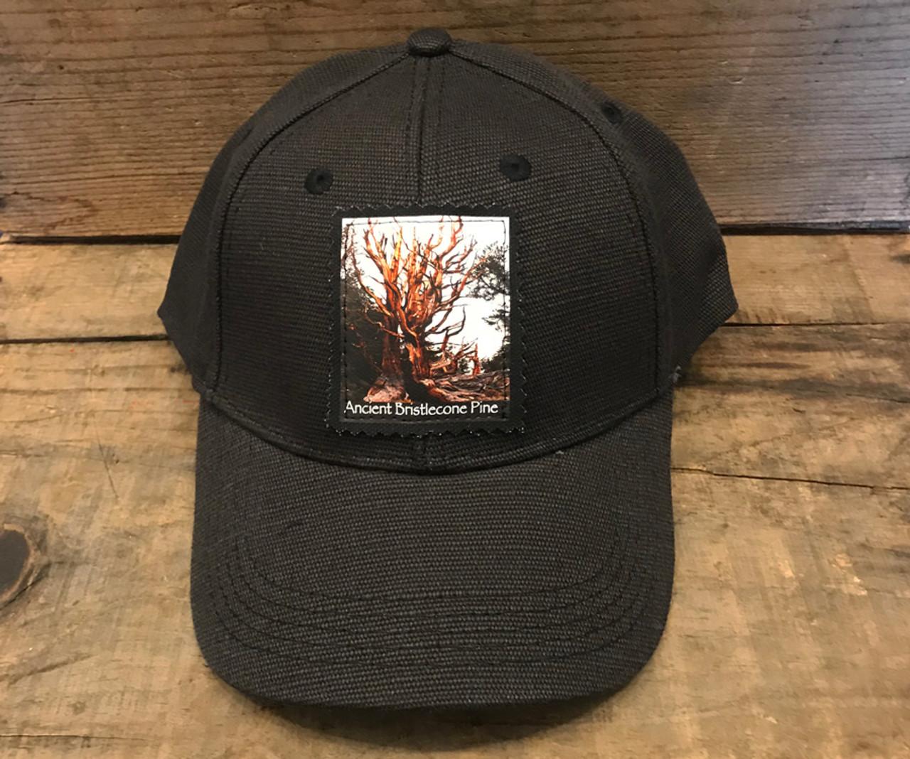 Ancient Bristlecone Pine #818 Hemp Baseball Hat
