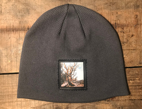 Ancient Bristlecone Pine #800 Organic Cotton Beanie Hat