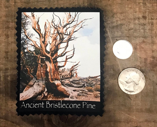 Ancient Bristlecone Pine #800 Patch