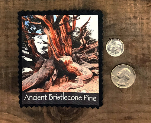 Ancient Bristlecone Pine Tree #803 Patch