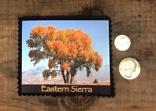 Eastern Sierra Cottonwood Tree #817 Sew On Patch