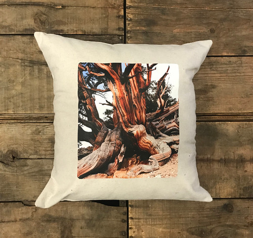Ancient Bristlecone Pine #803 Handcrafted Pillow