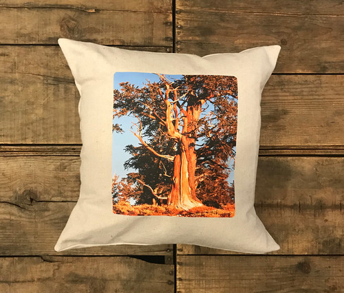 Ancient Bristlecone Pine at Sunrise #806 Handcrafted Pillow