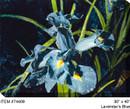 Lavender's Blue Canvas Wall Art