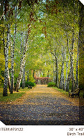 Birch Trail Canvas Wall Art