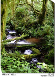 Forest Stream Canvas Wall Art