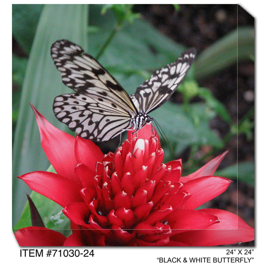 Black & White Butterfly Canvas Wall Art
