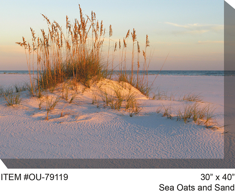 Sea Oats and Sand Canvas Wall Art