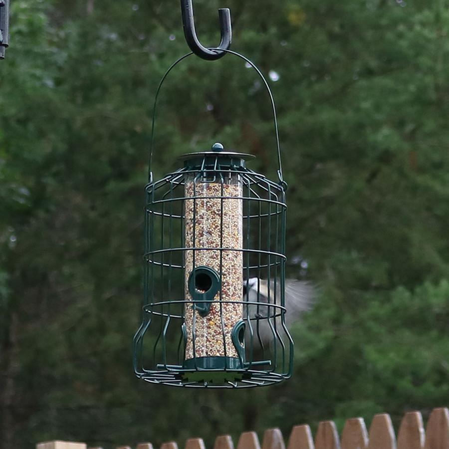 Outdoor w/ Bird
