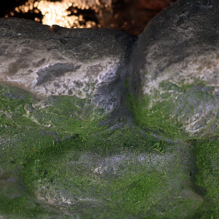 Closeup of Moss Detail