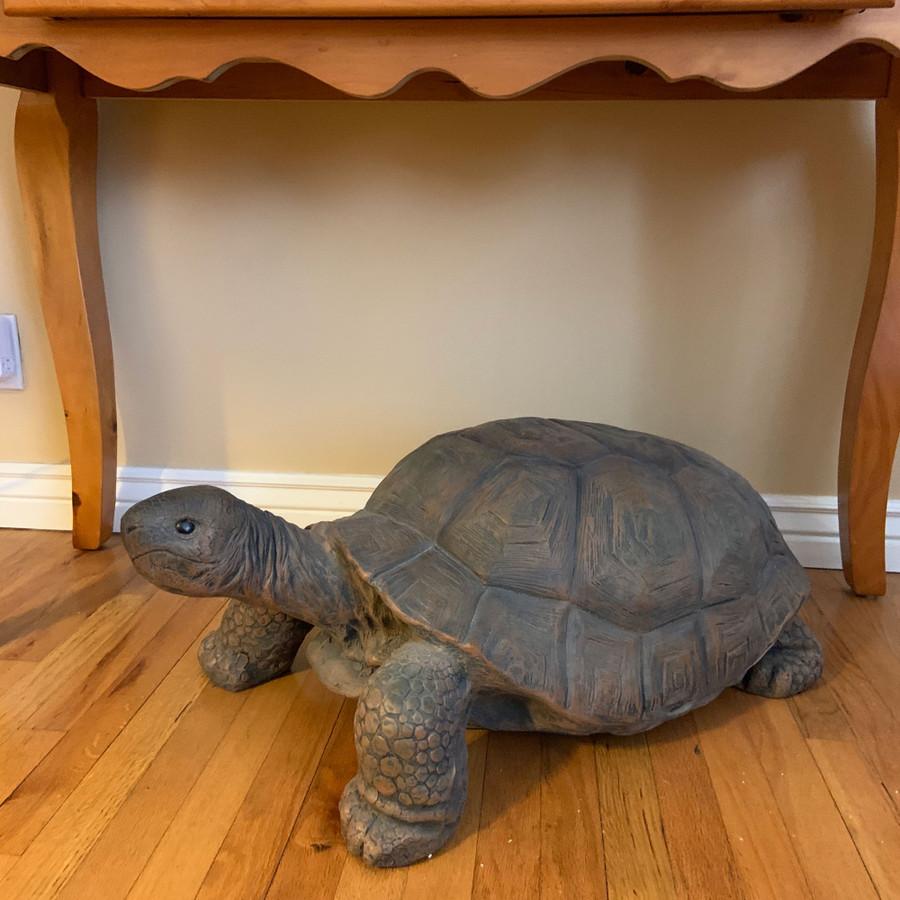 Todd the Tortoise Indoor/Outdoor Statue