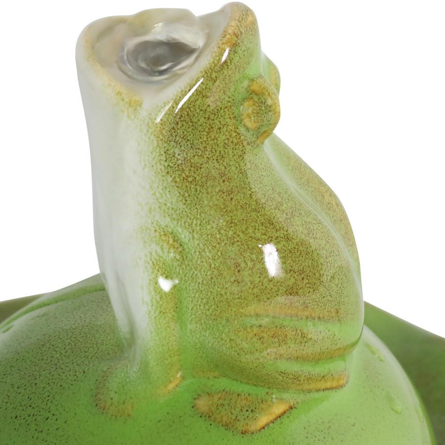Closeup of Frog