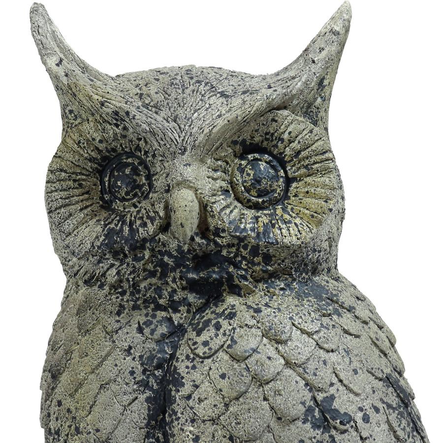 Closeup of Top of Owl