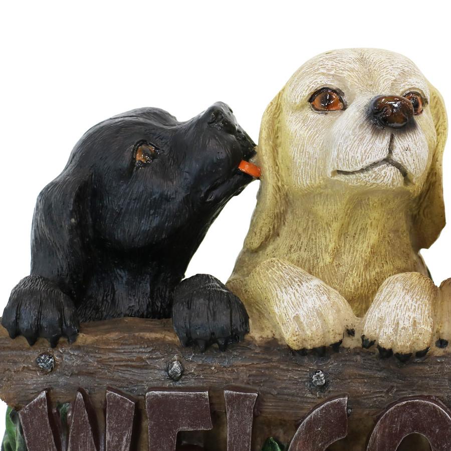 Close Up of Black Dog