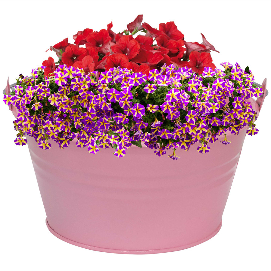 Sunnydaze Galvanized Steel Bucket Planter with Handle - Set of 10 - Pink