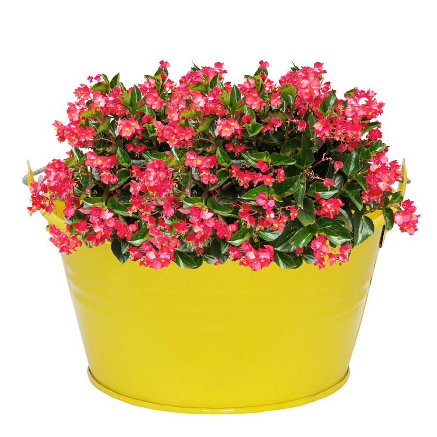 Sunnydaze Galvanized Steel Bucket Planter with Handle - Yellow