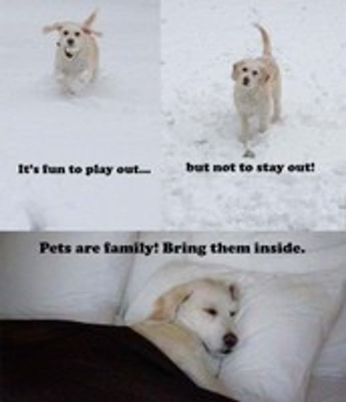 How to Keep Your Dog Healthy This Winter