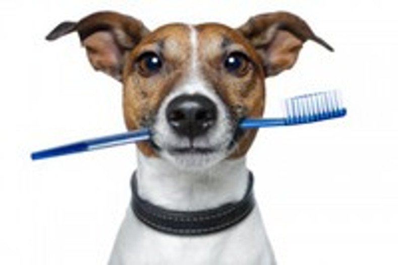 Doggie Dental Health – 7 Things You Should Know