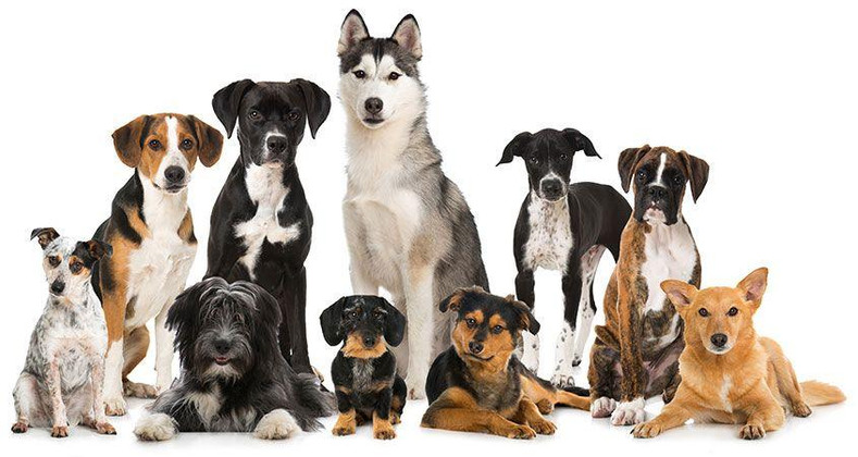 Suggested dog breeds for families with children