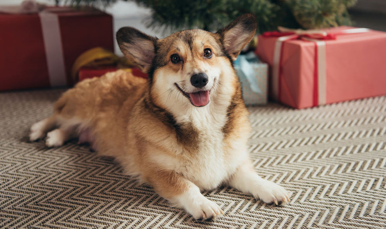 6 Christmas Safety Tips for Dog Owners