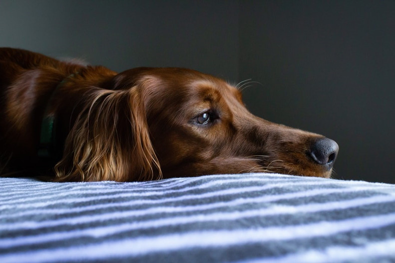 Is My Dog Depressed?
