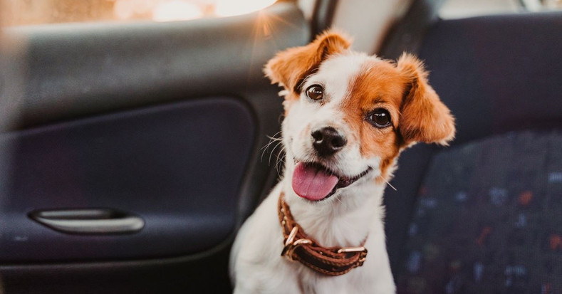 How Having a Pet Can Help With Depression and Anxiety