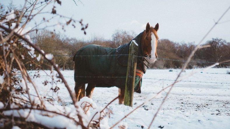 Top 5 Tips to Maintain Your Horse Skin in Winter