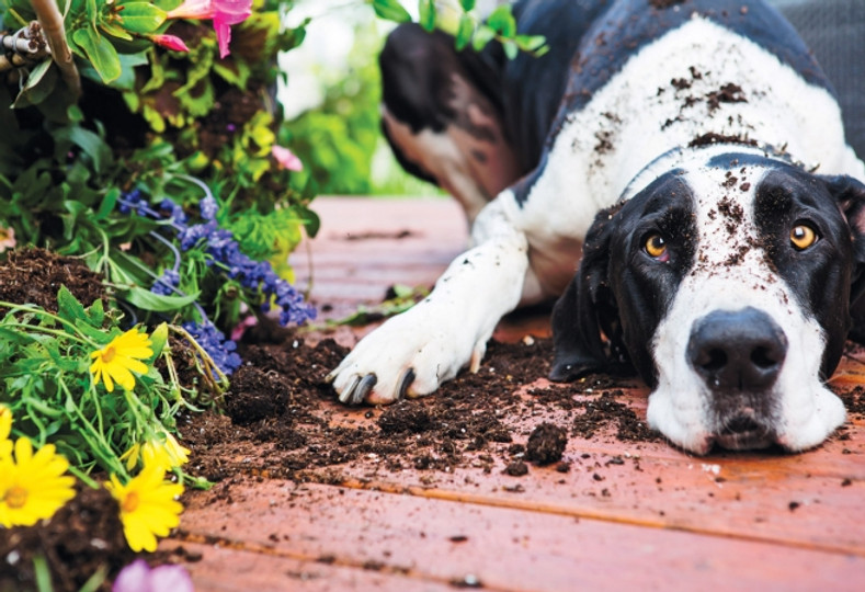 Can Dog Waste Be Used In Garden Compost?
