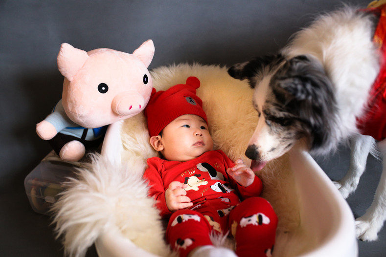 10 Tips for Preparing Your Fur Baby for Your New Baby