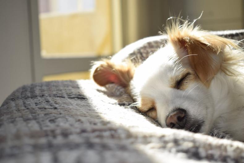 Do the Seasons Affect Your Dog's Mood?