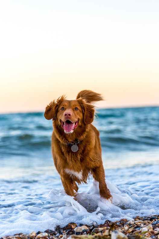 Preventative Health & Wellness Tips for Dogs