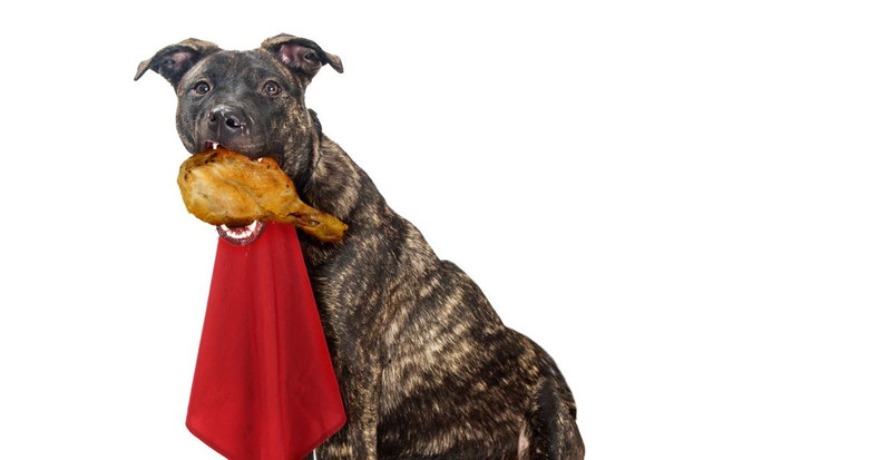 These Holiday Foods Are Safe for Fido